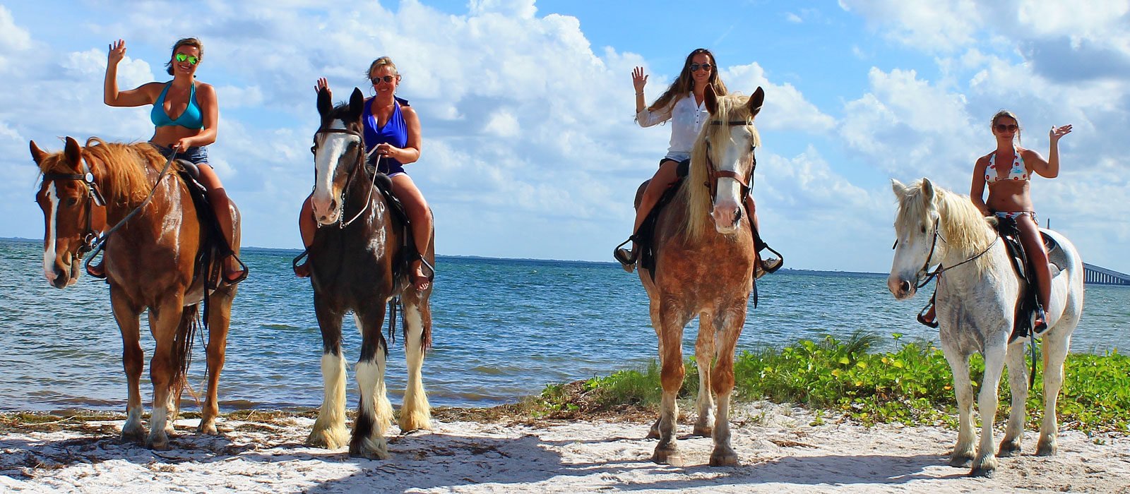 Horseback Riding Pinellas County