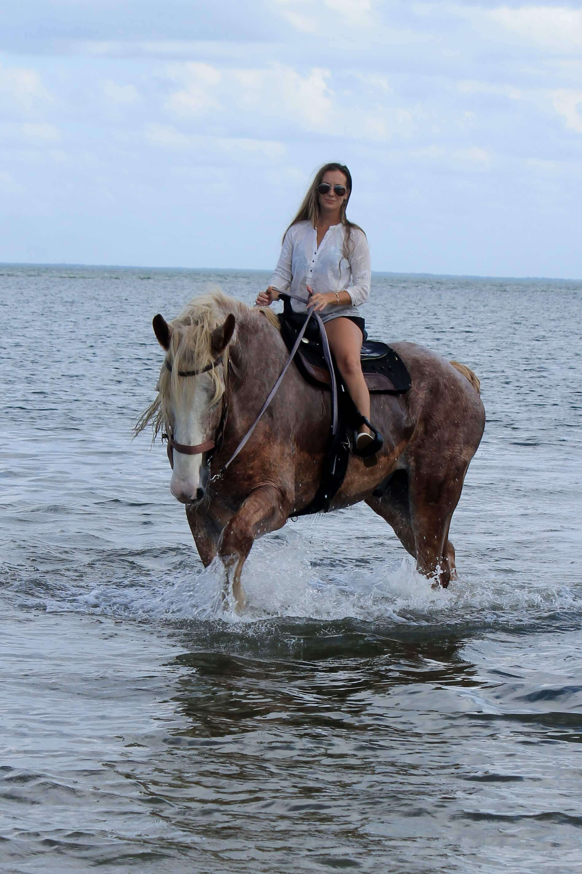 Beach Horseback Riding and Swimming with Horses in Tampa ...