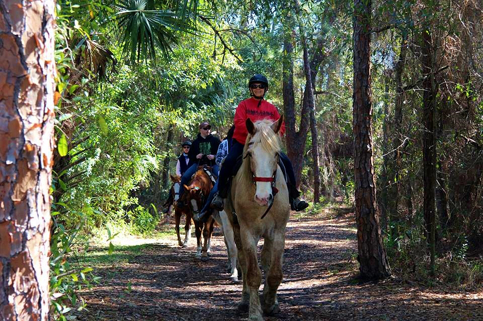 Horseback Trail Riding