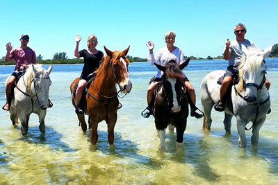 Beach Horseback Riding and Swimming with Horses in Tampa Bay