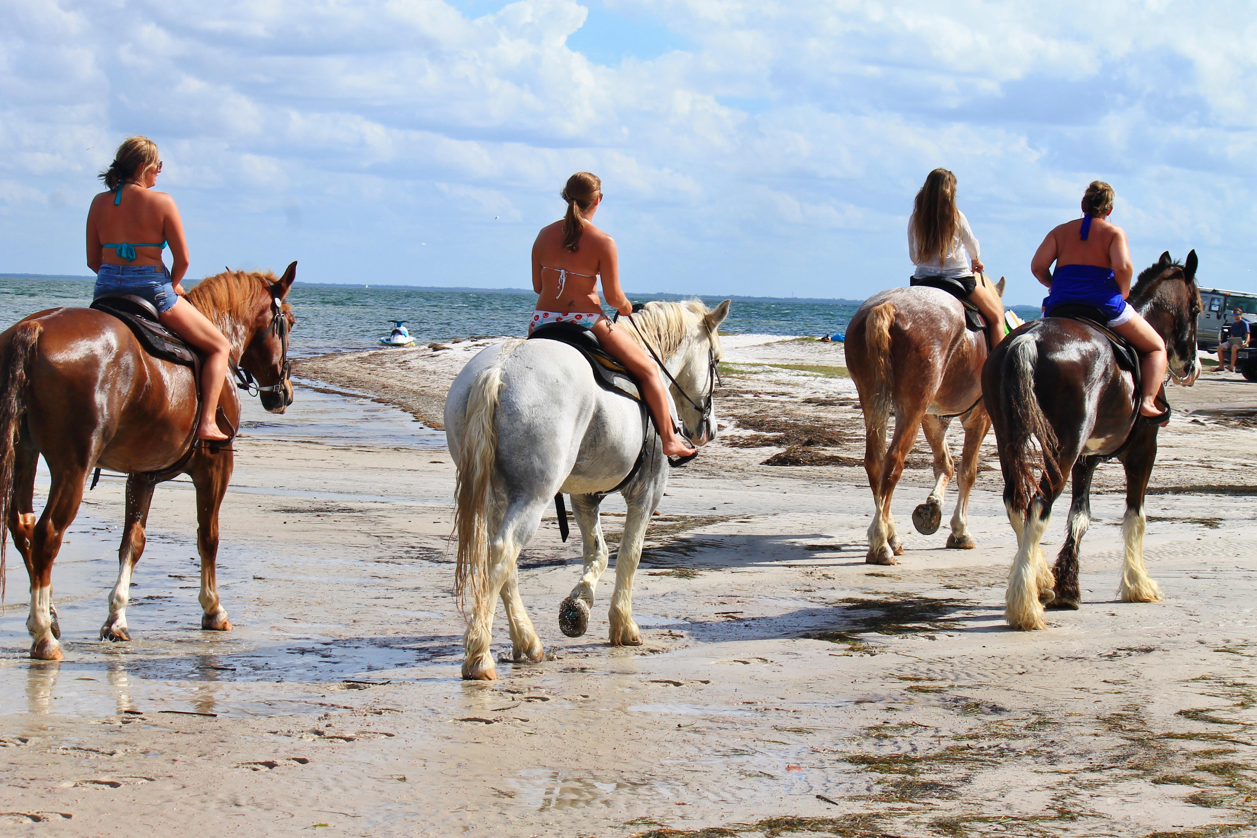 Florida Beach Horse Back Rides Cypress Breeze Farm