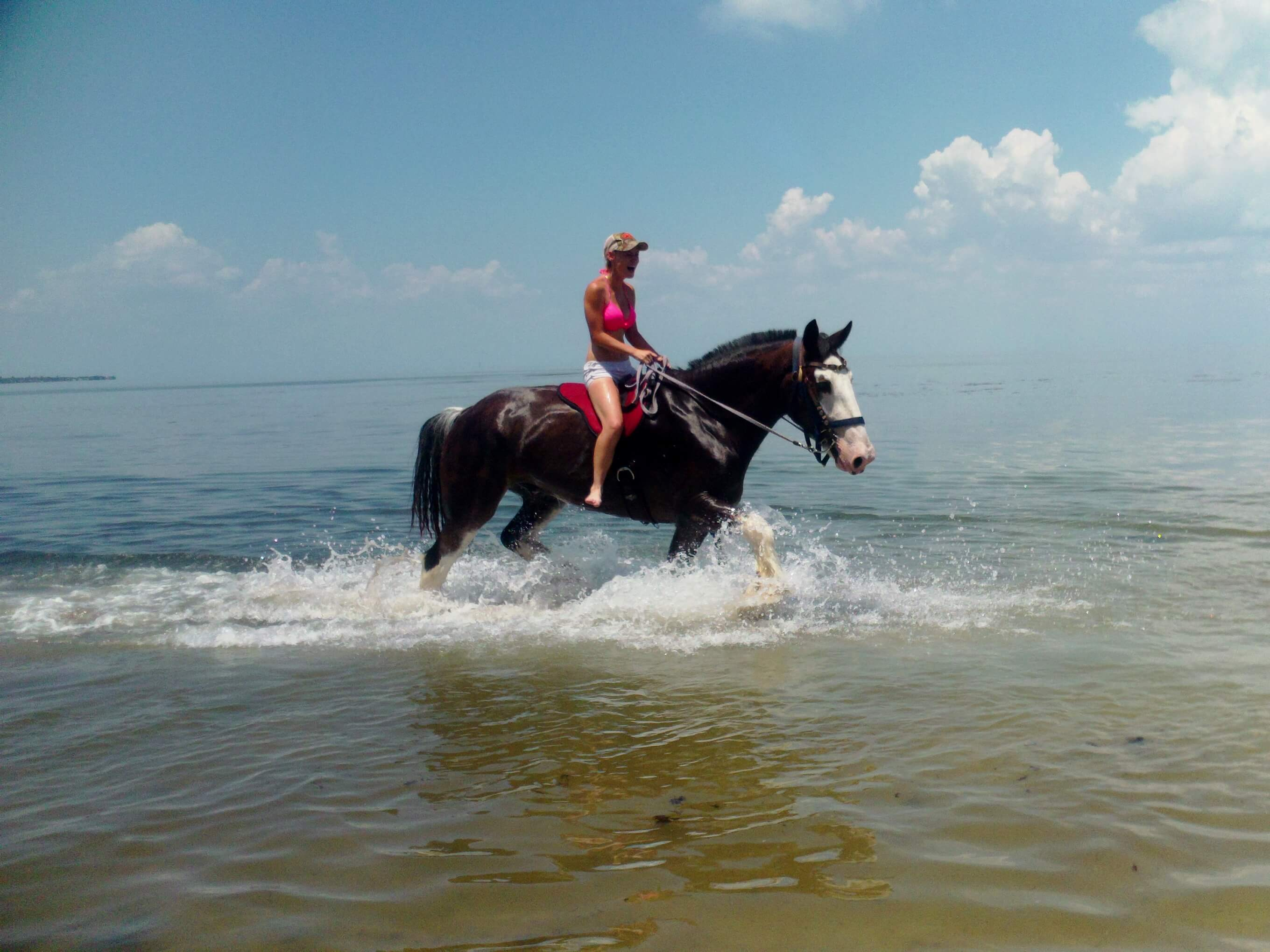 St Petersburg Clearwater Horseback Riding On The Beach
