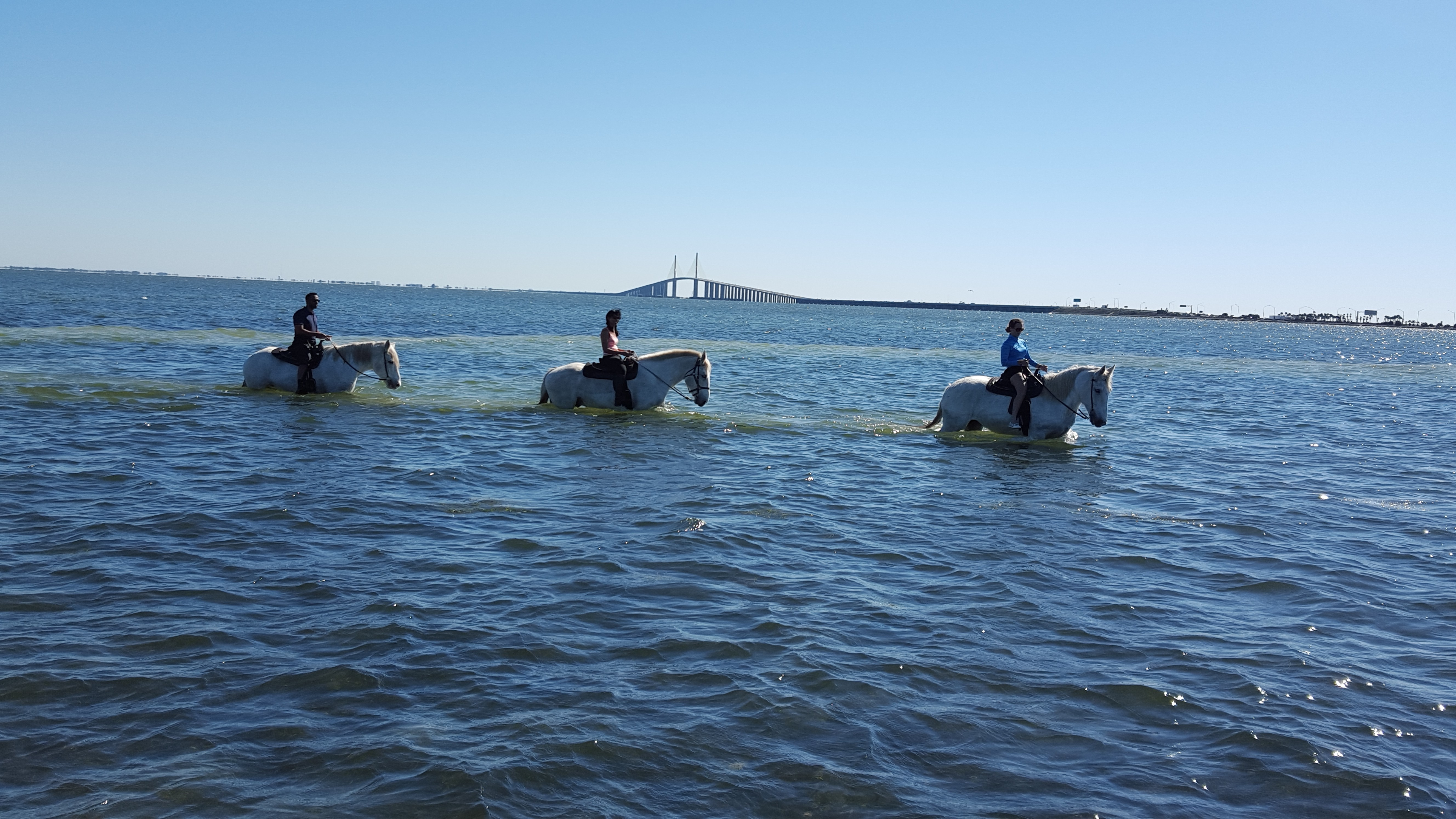 Beach Horseback Rides Swimming With Horses St Petersburg