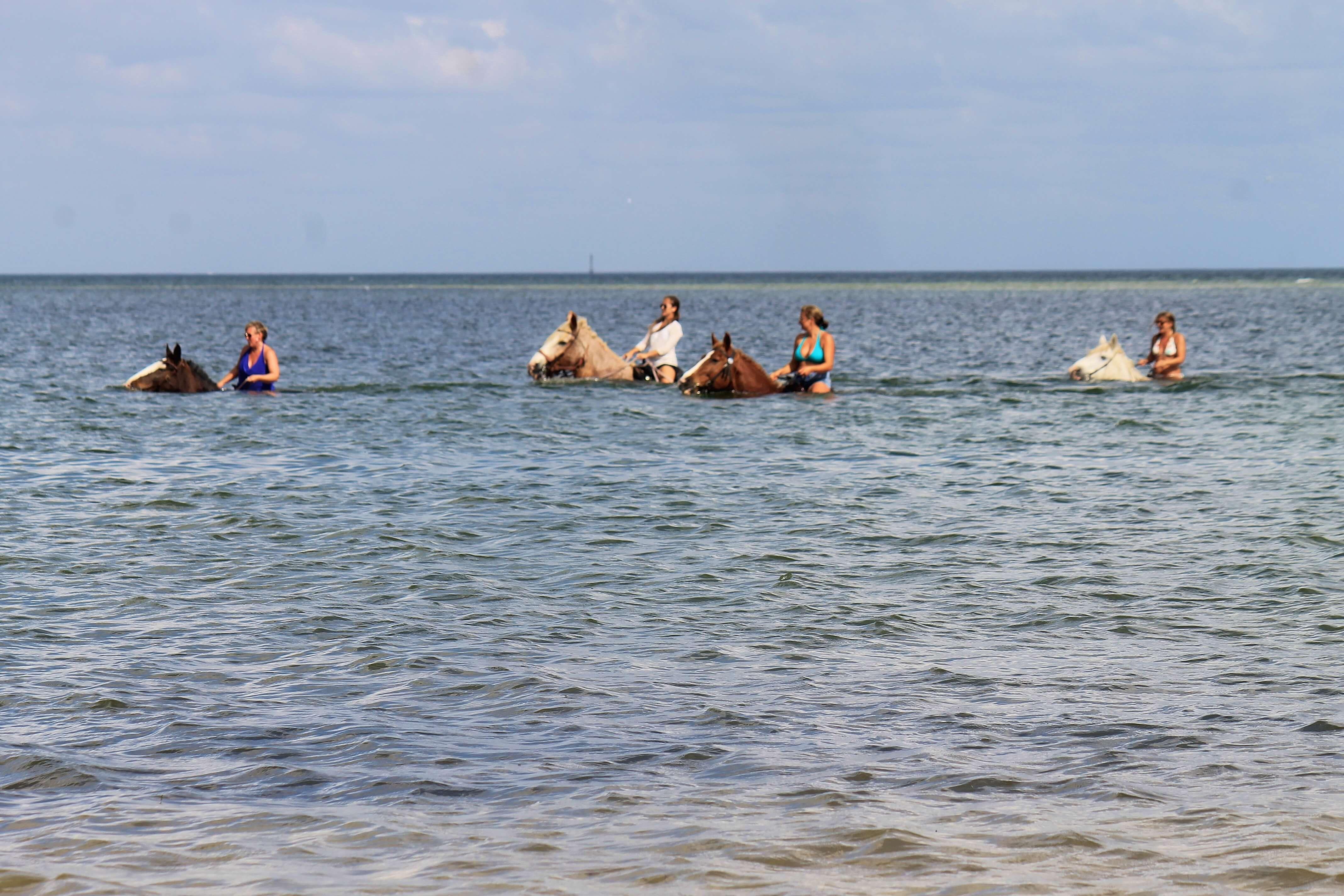 Beach Horseback Rides Sarasota St Pete Tampa Clearwater